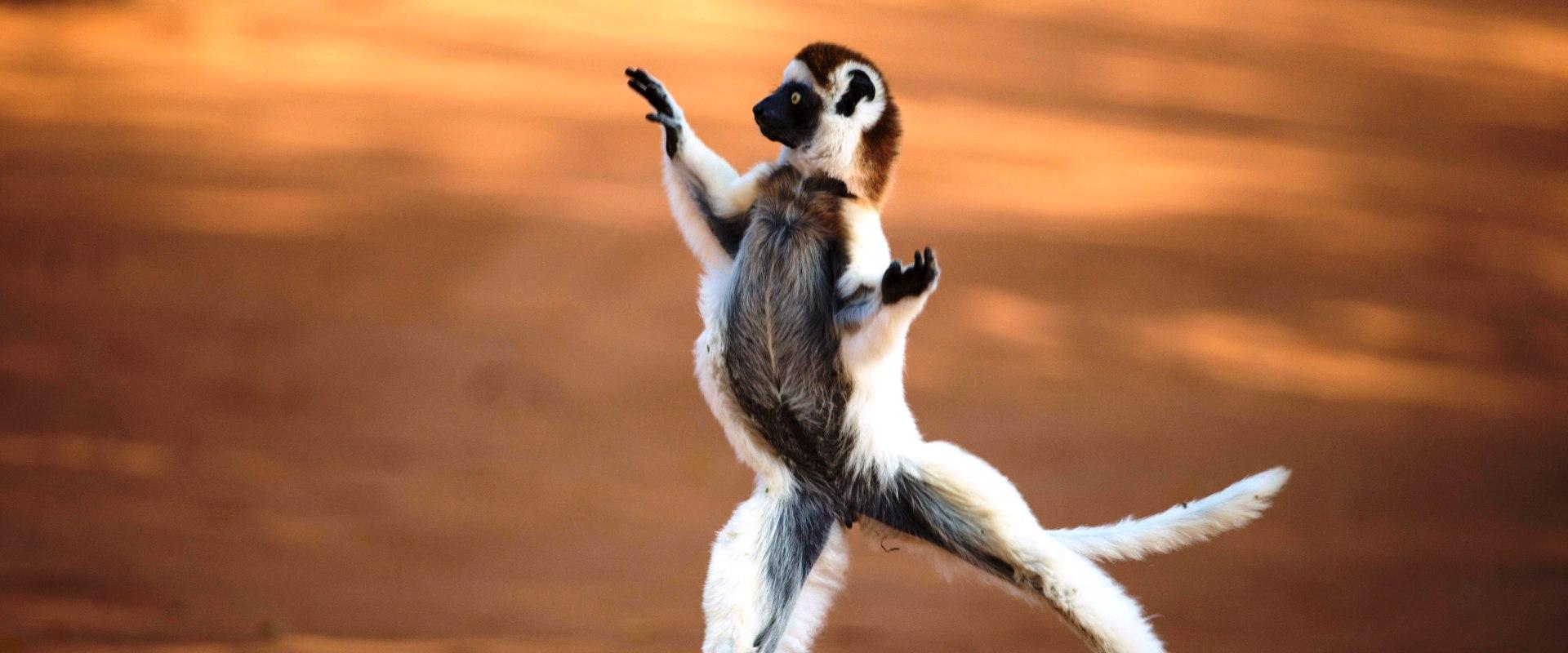 Madagaskar1
