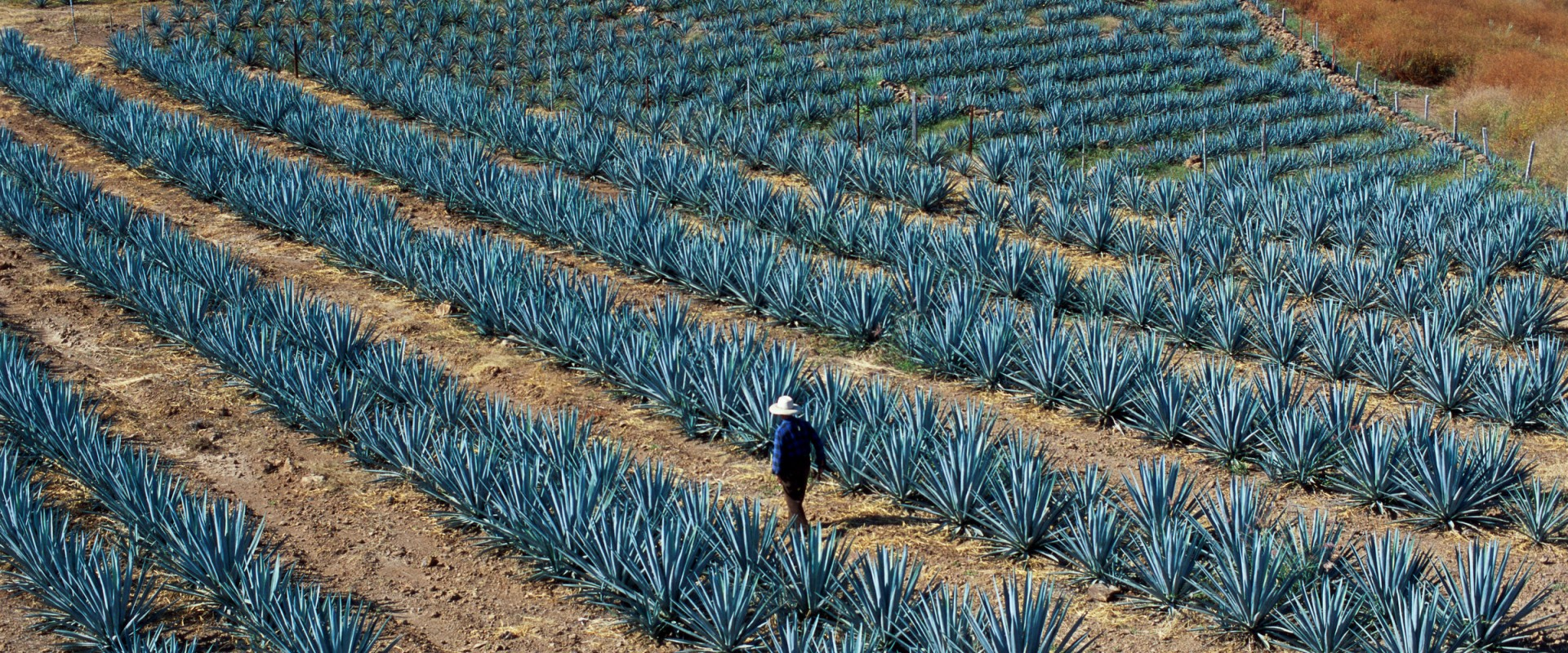 mexico_tequila