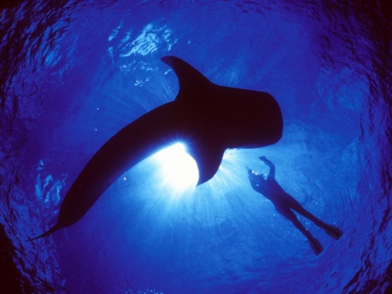 Τα καλύτερα μέρη για να κολυμπήσετε με φαλαινοκαρχαρία