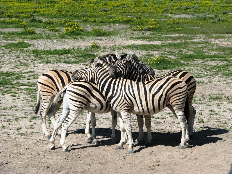 Εθνικό πάρκο Ετόσα